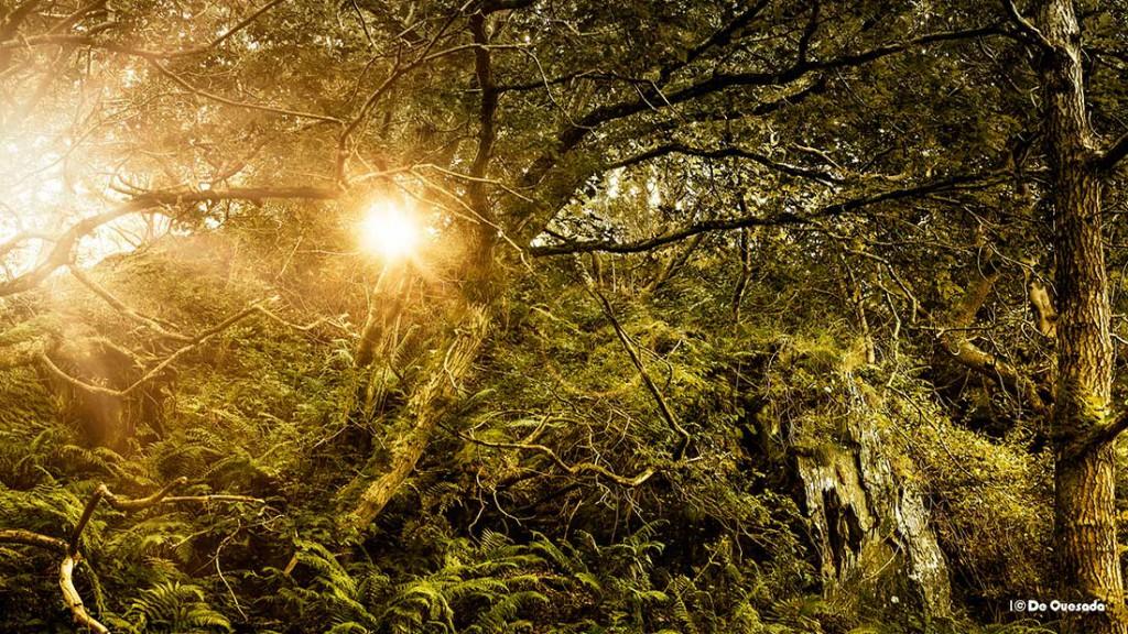 Photography gallery sun peeking through the trees
