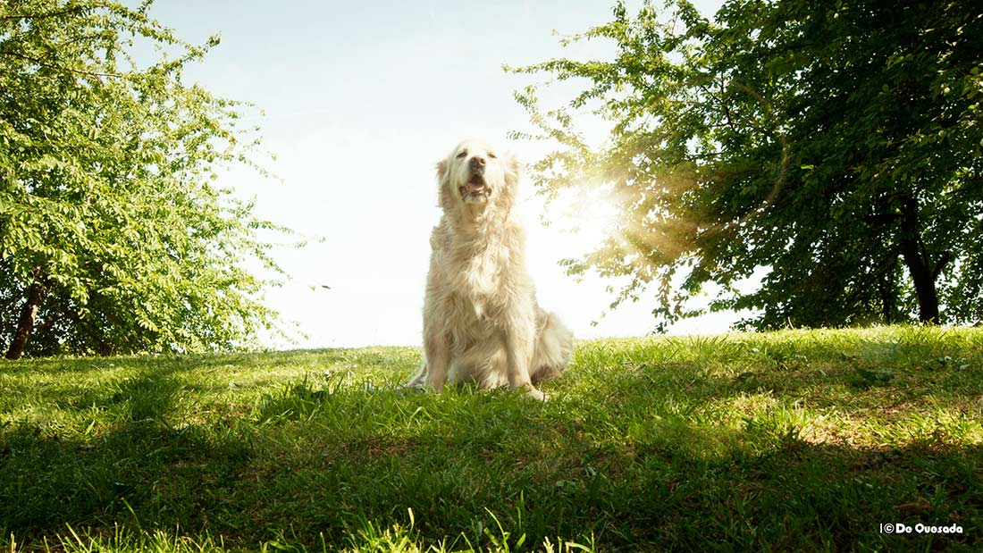 Photography gallery white dog sitting on the grassy hill in the park